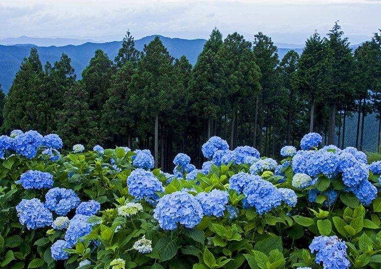 山上の聖地!高野山で過ごす夏の見どころ