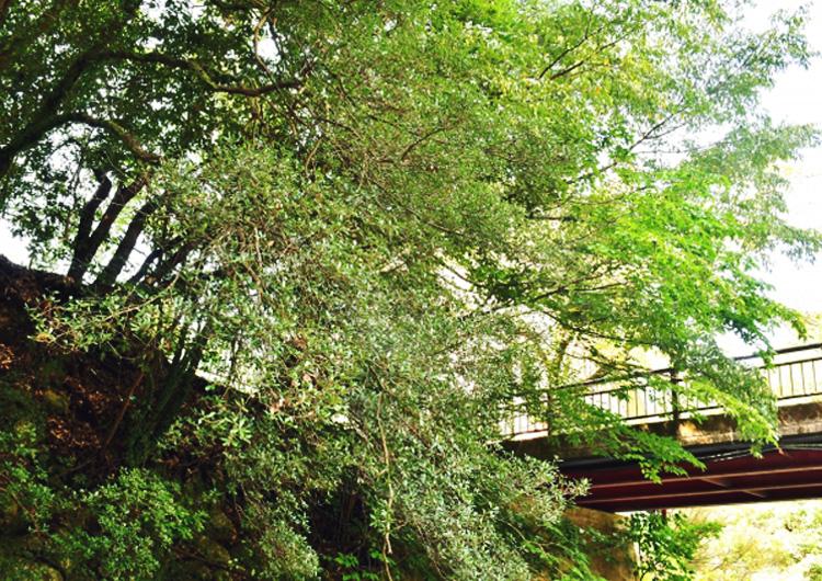 まさに名湯!犬鳴山の温泉を楽しめる施設・旅館ガイド