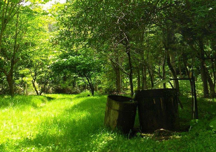 森林セラピーソロプラン