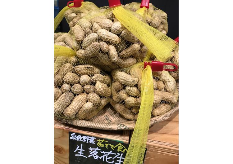 【募集中】落花生の収穫体験!!~泉佐野・野々地蔵を訪ねて~
