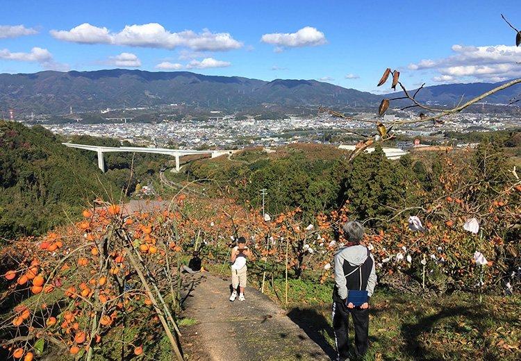 【募集中】天空の柿園ハイキング