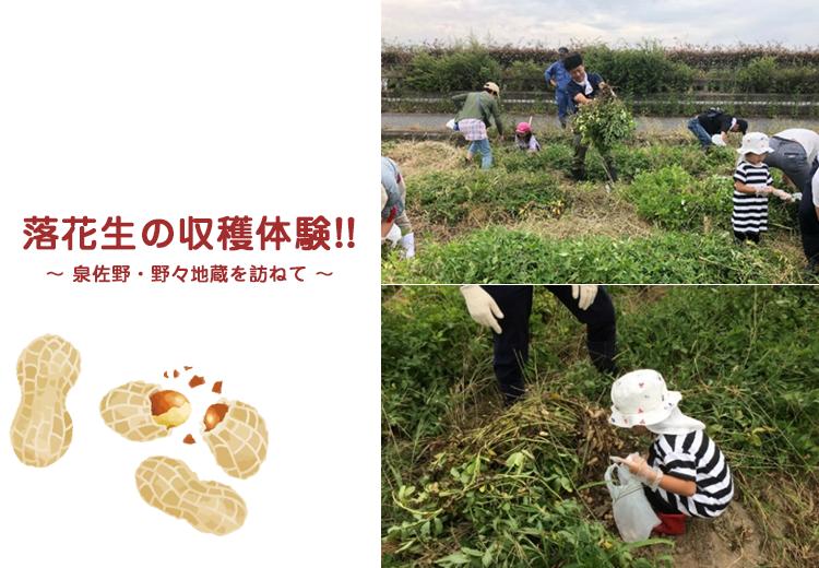 落花生の収穫体験!! ~ 泉佐野・野々地蔵を訪ねて ~