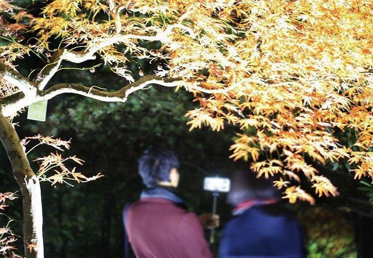 大阪府立花の文化園 紅葉