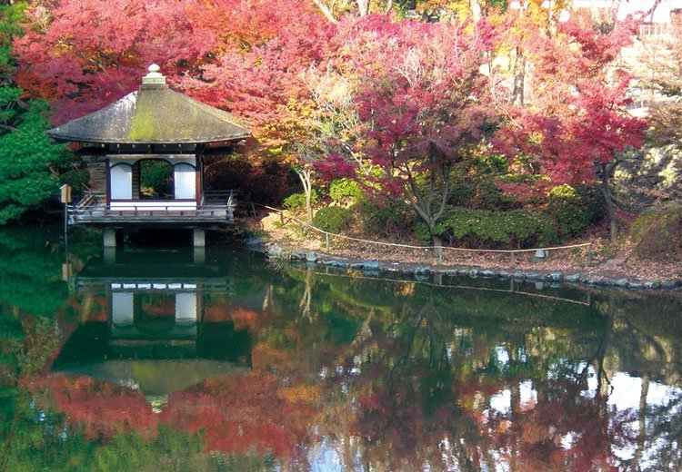 和歌山城 西之丸庭園 紅葉《紅葉渓(もみじだに)庭園》