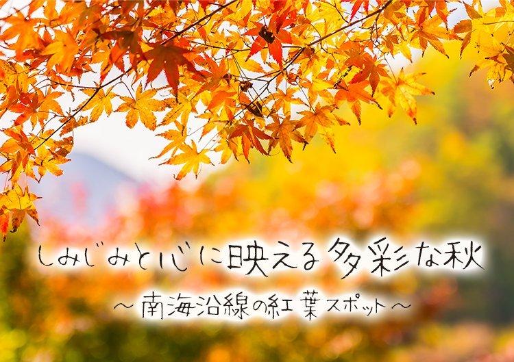 【紅葉特集】 しみじみと心に映える多彩な秋~南海沿線の紅葉スポット~